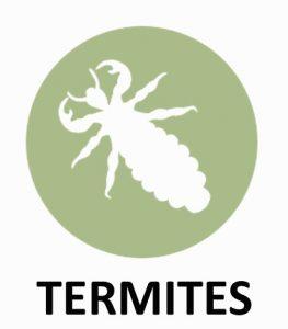 Diagnostic Immobilier Loir et Cher 41 Termites